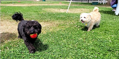 Learn & Play Small Dog Social 8/14/21 tickets