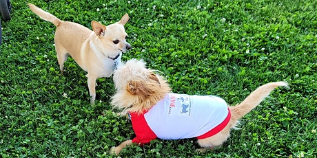 Learn & Play Small Dog Social 8/21/21 tickets
