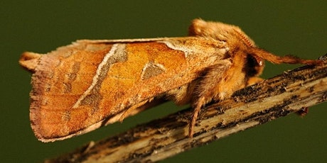 Moth survey tickets