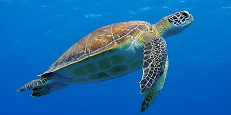 Snorkelling in Australia with Sea Turtles tickets