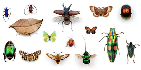 Insect Week: Colours and Camouflage tickets