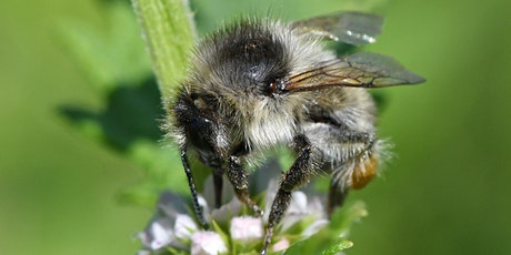 Pollinator Guided Walk at Hendre Lake tickets