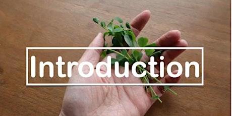 Easy Gardening: Indoor Edible Plants Free Workshop tickets