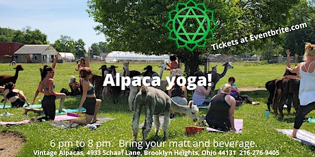 Alpaca Yoga and farm tour! Up close and personal with mommies and babies! tickets