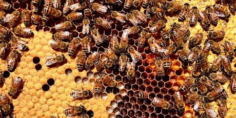 Beekeeping 101: Is Beekeeping For Me? tickets