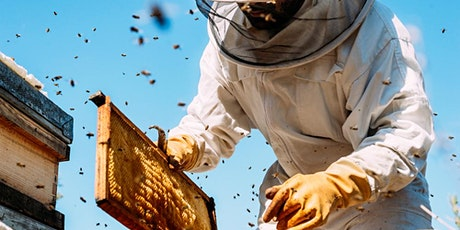 Bee 201L: Hitting the Hives (In-person portion) tickets