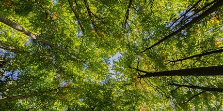 Mindfulness in the Woods at Sherbrook Wood tickets