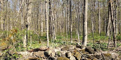 Escapade nature au bois de Saraguay billets