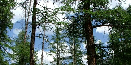 Immersione in foresta al crepuscolo….con aperitivo! biglietti