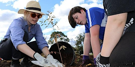 NAIDOC Week Children's Activity: Bush Foods of the Dharawal tickets