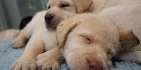 Seeing Eye Dogs PAWfect Partner day - North Brisbane Event tickets