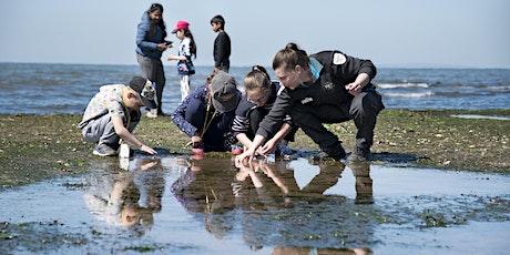 Junior Ranger Rockpool Ramble- Ricketts Point Marine Sanctuary tickets