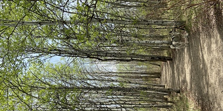 Forest Bathing - Moving On tickets