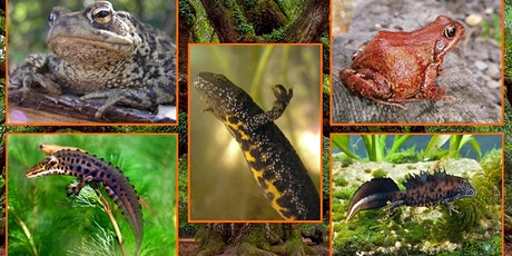 Amphibian Identification & Ecology tickets