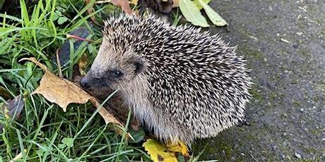 Hedgehogs in Shaftesbury tickets