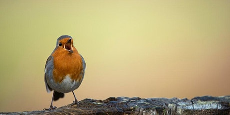Birding for Beginners tickets
