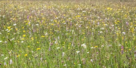 Sustainable Food Trust webinar: Measuring biodiversity on farms tickets