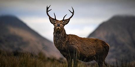 Wilder Future for Warwickshire: Rewilding Webinar tickets