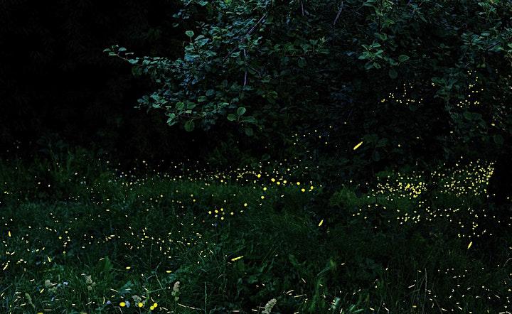 Immagine Firefly Meditation
