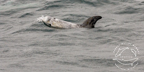Marine Wildlife Cruise - Full Day tickets