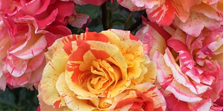 Themed Tour: Scentsational - A Story of Perfume and Pollinators tickets