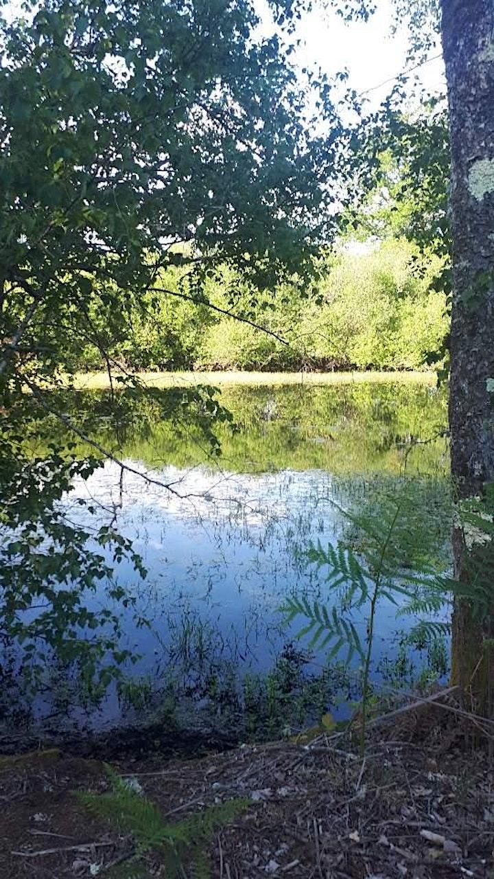 Image pour Stage de Méditation en Pleine Nature / Dimanche Matin