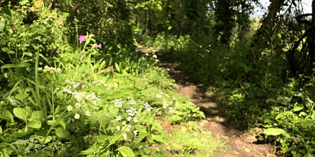 Celtic Foraging and Wild Medicine Workshop in Wales tickets