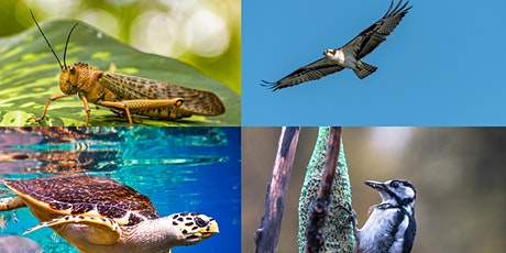 Learn about the Food Chain with Wagner Institute of Science tickets
