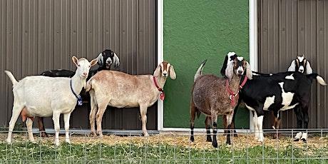 Milk the Goats with Elderslie tickets