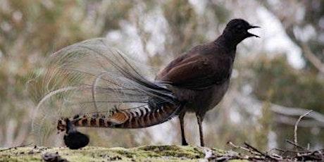 Junior Rangers Wildlife Detective - Churchill National Park tickets