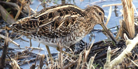 Guided Tour of the RSPB Ken Dee Marshes tickets