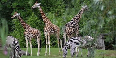 Shupin Social Club—Zoo Visit tickets