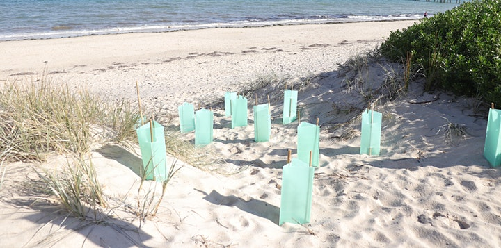 Reclaim the Dunes: Seacliff Beach Tower Community Planting Event! image