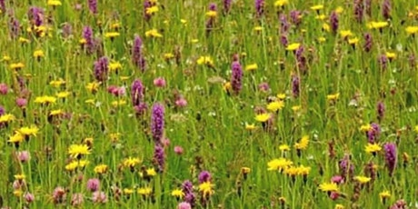 Summer foraging courses tickets