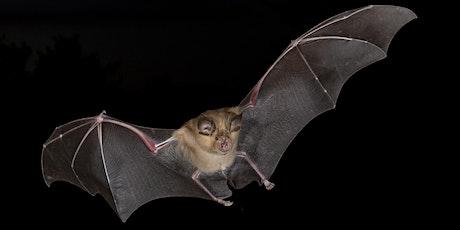 Braunton Bat Walk - Braunton Beacon tickets