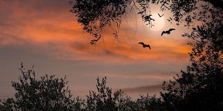 Braunton Bat Walk - Velator Wetland tickets