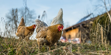 La garde de poules 2.0 - L'alimentation naturelle tickets