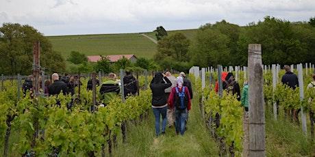 Singlewandern und Weinprobe in der Pfalz ab 50+ Tickets