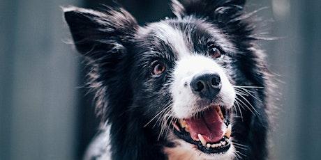 Drawing Club : Fundamentals / Dog Portrait tickets