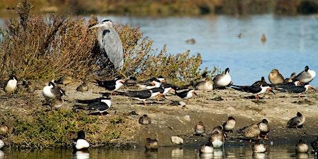 Beginner/Refresher Bird Walk - Bedwell Bayfront Park tickets