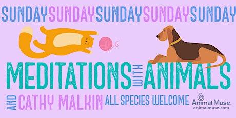 Sunday Meditations with Animals -- July 18, 2021 tickets