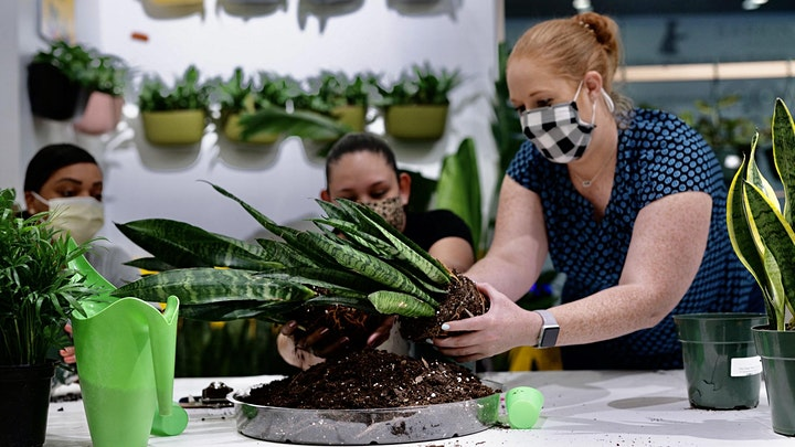 How Not to Kill Your Plants Plant Workshop image
