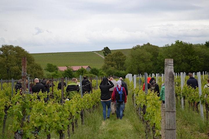 Singlewandern und Weinprobe in der Pfalz unter 50: Bild
