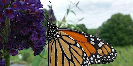 Monarch Butterfly Workshop tickets