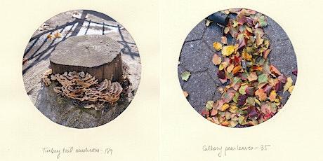 Meet the Artist: Garden Observation Walk tickets
