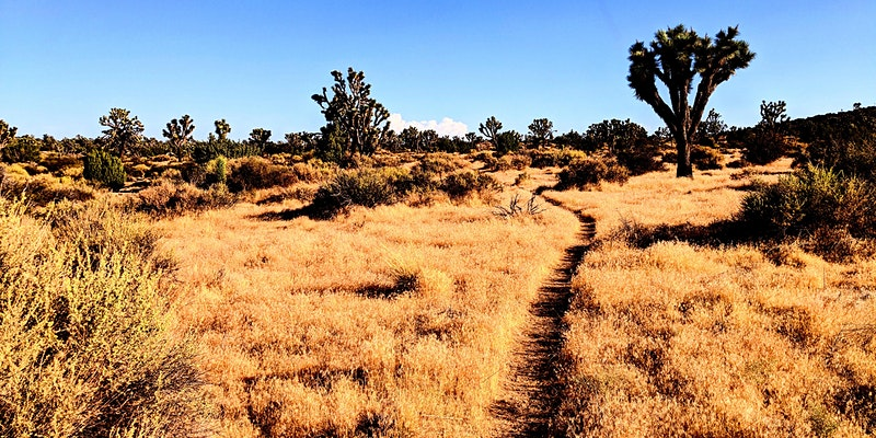 "Desert Institute at Joshua Tree National Park Invitation: ""Hike the Covington Coaster"""