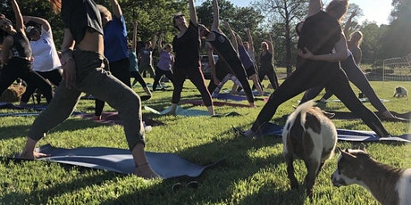 Sunflower Sunset Goat Yoga at the Farm - Columbia, MO tickets