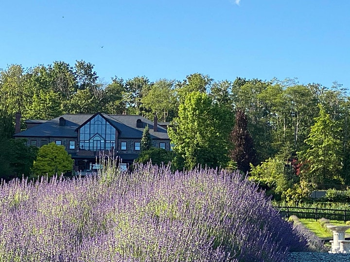 Yoga & Oats on a Lavender Farm image