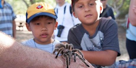 A Virtual Outing: Tarantula Trek tickets