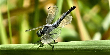 Wildlife Talk - Interesting Insects tickets